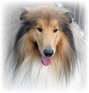 dog-220371_640 (pixabay)